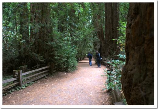 Redwoos Park Trail